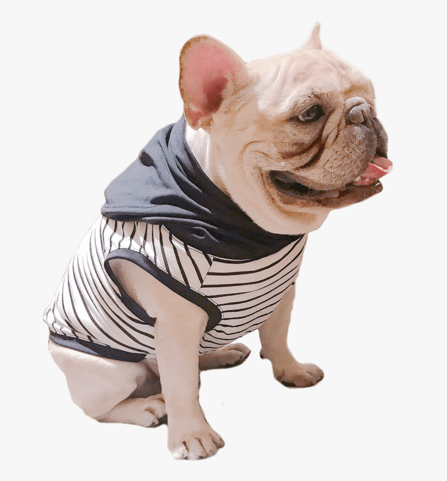 Ropa Para Perro Pug Transparent Cartoon Free Cliparts