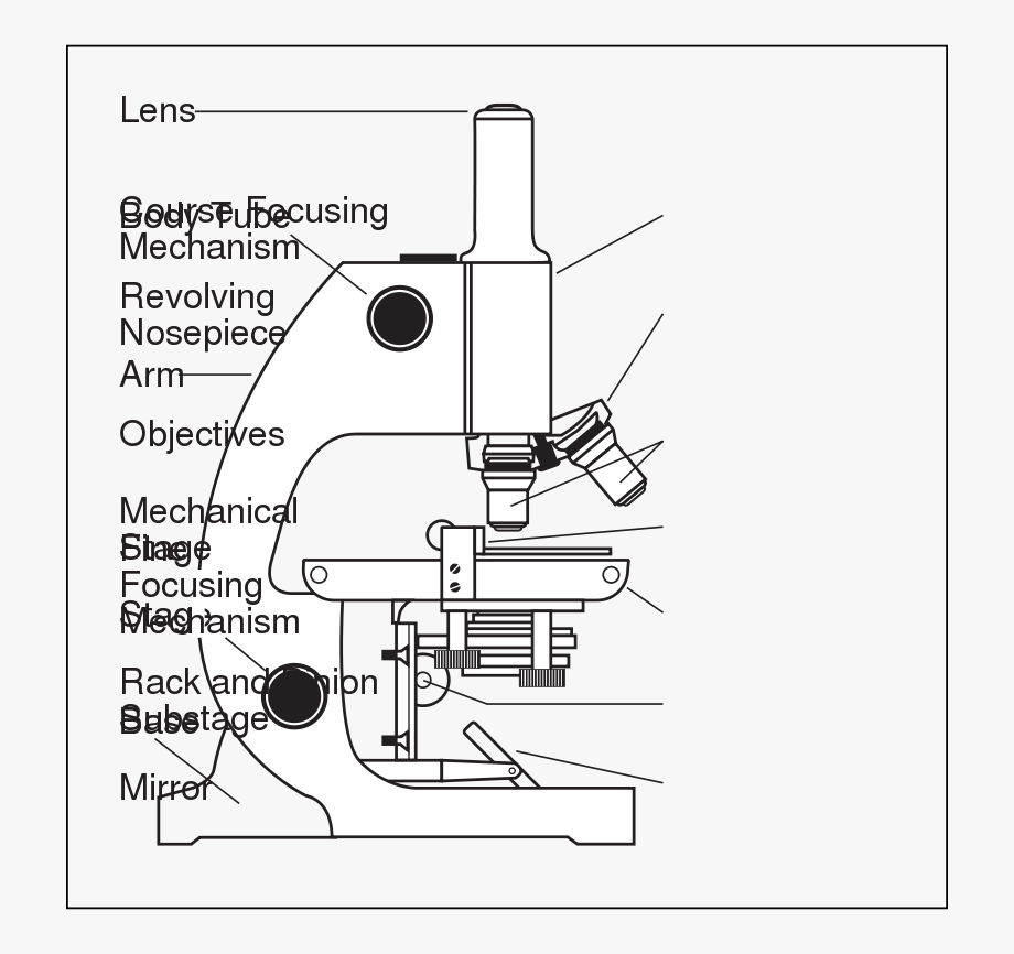 Binocular Microscope Diagram And Label Transparent Cartoon Free